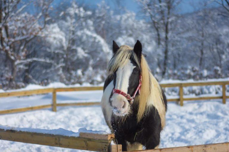 horse-2115557